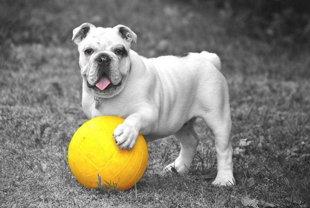Bulldog aktivointi